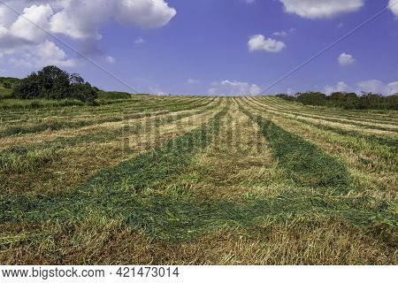 Agricultural Field With Freshly Cut Grass Against A Blue Sky With Clouds