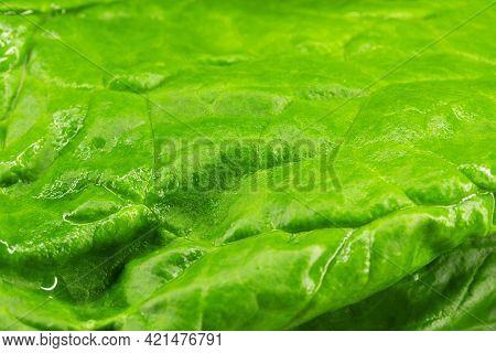 Spinach Macro Photo, Yakraya Macro Photo Spinach Salad
