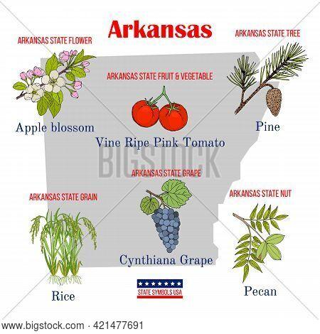 Arkansas. Set Of Usa Official State Symbols. Vector Hand Drawn Illustration