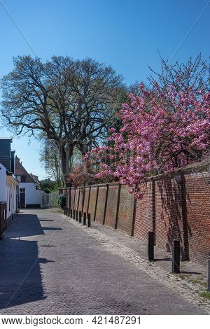 Blossom Tree With The Red Brick Wall