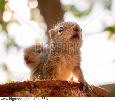 Small Sibling Squirrel Baby Rides Big Brothers Back, Cute Adorable Animal-themed Photograph, Three-s