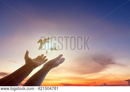 Woman Freedom Praying And Free Bird Enjoying Nature On Sunset Or Sunrise Background,hope Concept