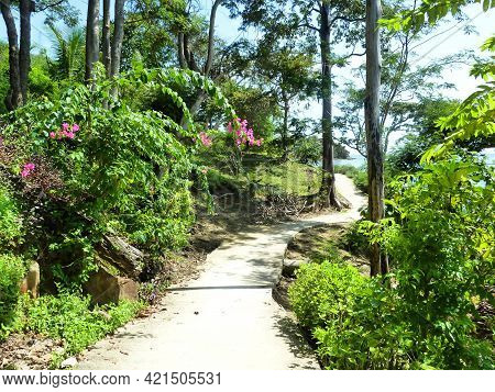 Empty Patway To The Tropical Forest During Hot Day, Blue Sky And Green Lush Vegetation. Winding Road