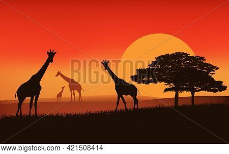 Giraffe Family Walking Over African Savannah At Sunset - Evening Landscape Vector Silhouette Scene