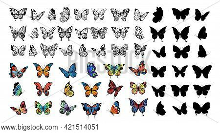 Butterfly Collection. Drawing Butterflies, Silhouette And Color Flying Insects. Spring Animals, Wild