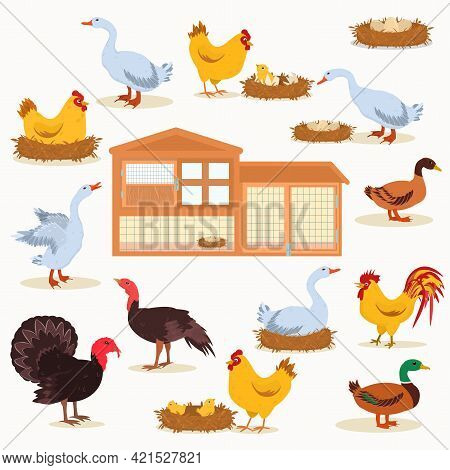 Vector Illustration Of Farm Bird Hatching Eggs, Chickens, Coop Isolated On White Background