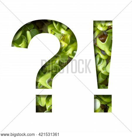 Font On Micro Greenery. Exclamation And Question Marks Cut Out Of Paper On The Background Of Sprouts