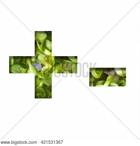 Font On Micro Greenery. Plus And Minus Signs Cut Out Of Paper On The Background Of Sprouts Of Fresh
