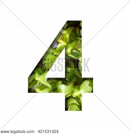Font On Micro Greenery.the Digit Four, 4 Cut Out Of Paper On The Background Of Sprouts Of Fresh Brig