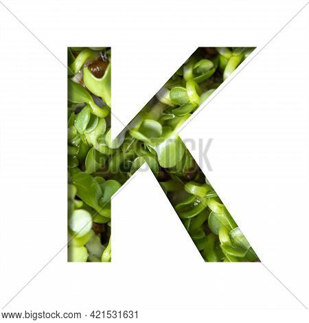 Font On Micro Greenery.the Letter K Cut Out Of Paper On The Background Of Sprouts Of Fresh Bright Mi