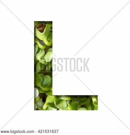Font On Micro Greenery.the Letter L Cut Out Of Paper On The Background Of Sprouts Of Fresh Bright Mi