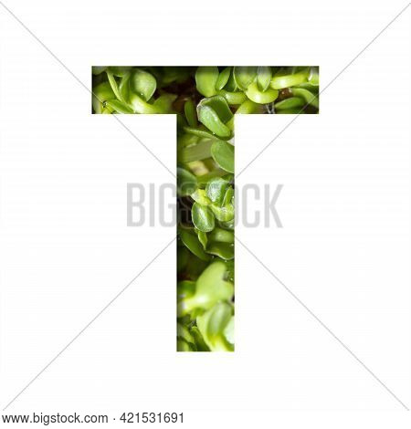 Font On Micro Greenery.the Letter T Cut Out Of Paper On The Background Of Sprouts Of Fresh Bright Mi