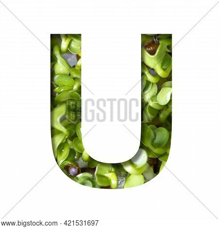 Font On Micro Greenery.the Letter U Cut Out Of Paper On The Background Of Sprouts Of Fresh Bright Mi