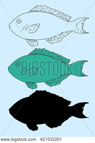 Redtail Parrotfish.sketch Sea Fish Retail Parrotfish. Hand-drawn Retail Parrotfish Side View In Emer