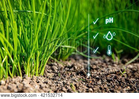 Smart Garden Concept With Chives And Controlled Soil. Intelligent Gardening With Optimal Soil Moistu