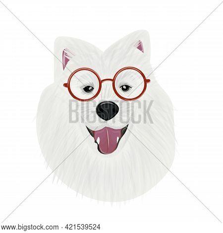 Samoyed, The Buddy Dog. Digital Vector Samoyed Dog Face