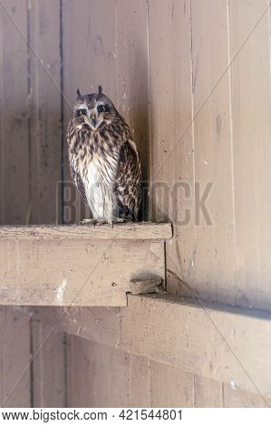 Photo Owl In A Cage. Keeping Birds Of Prey In Captivity.