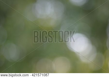 Green Bokeh Background. Green Background With Large Bokeh.design Element