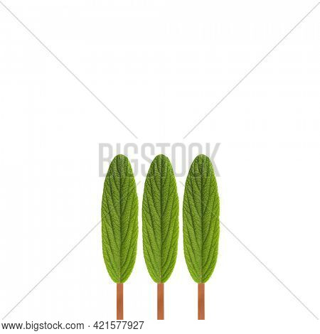 Three trees abstract simple picture made of three leaf graphic concept. Nature minimalism background. Modern design on white backdrop