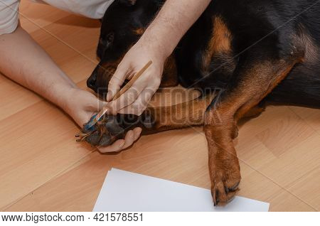 A Man And His Dog Are Lying On The Floor Of The Living Room. A Hand Brushes A Rottweiler's Paw With