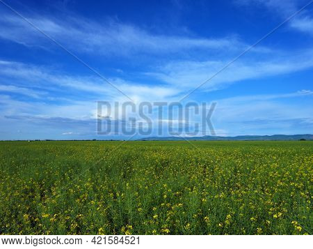 Green fresh grass under blue sky with cloud in summer day. Landscape view of green grass on slope with blue sky and clouds background. Field on a background.