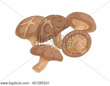 Asian Shiitake Mushroom Or Fungi. Raw Forest Edible Fungus Composition. Natural Organic Vegetarian F