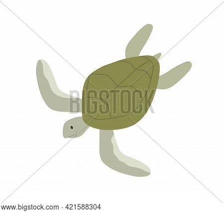 Green Aquatic Turtle With Shell. Undersea Tortoise With Carapace Isolated On White Background. Amphi