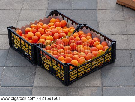 Organic Apricots At A Farmers Market. Apricots In Trays. Yellow Juicy Delicious Apricots In The Tray