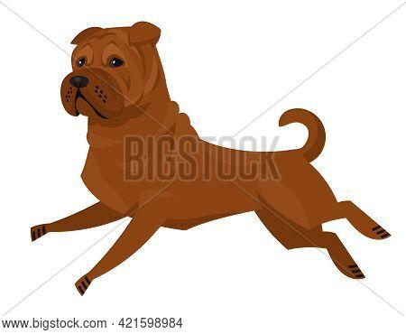 Running Shar Pei. Beautiful Pet In Cartoon Style.