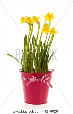 Yellow daffodils in pink bucket with ribbon and bow