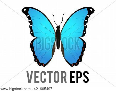The Vector Isolated Beautiful Winged Insect Butterfly Icon With Blue And Black Morpho Wings Outsprea