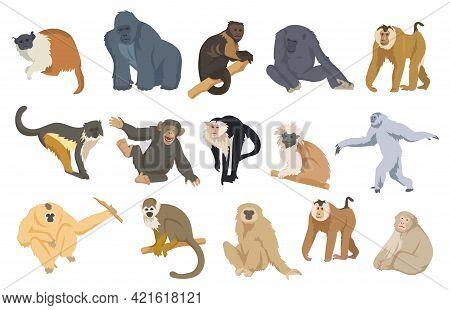 Cartoon Monkey Set Vector Illustration. Exotic Colorful Primates, Apes, Chimpanzees, Orangutans, Gor