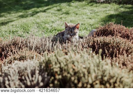 The Cat Hunts In Front Or Back Yard In Spring, Stock Photo