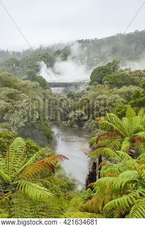 Scenery Around The Geothermal Valley Te Puia In New Zealand