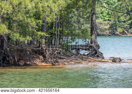 Erosion All Around The Shoreline At Lake Lanier In Georgia With The Tree Roots Exposed Holding Onto