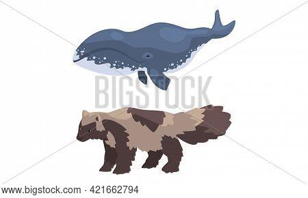 Polar Animals Set, Arctic Raccoon Dog And Killer Whale Cartoon Vector Illustration