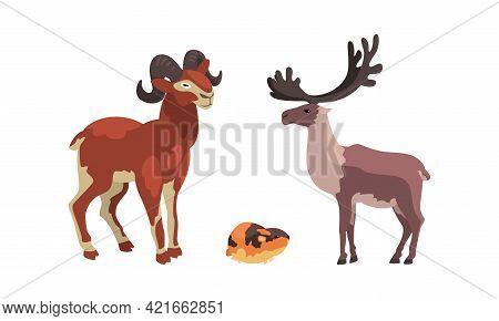 Polar Animals Set, Arctic Reindeer, Lemming And Mountain Goat Cartoon Vector Illustration