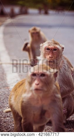 Mother And Her Baby Monkey.  Monkeys Macaque In  Thailand, South East Asia. Happiness Background Con