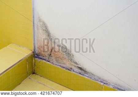 Black Mold On The White Wall In The Bathroom, Health Hazard.