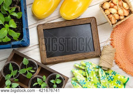 Gardening tools and sprout on the wooden floor Top view