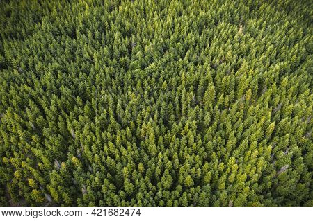 Drone view of a green forest