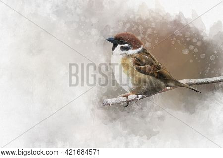 Little Sparrow Resting On A Branch. Watercolor Digital Painting Vintage Effect. Bird Illustration.