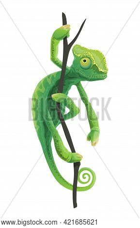 Cute Green Chameleon Sitting On Tree Branch. Exotic Lizard Pet, Tropical Forest Reptile Or Zoo Afric
