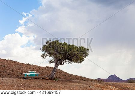Picturesque acacia tree and bench for the weary traveler. The magical desert in Namibia. Travel to Africa. Savanna covered with dry yellow grass. Hot day, lush clouds float in the blue sky.