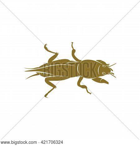 Mole Cricket Design Vector Illustration, Creative Mole Cricket Logo Design Concept Template, Symbols
