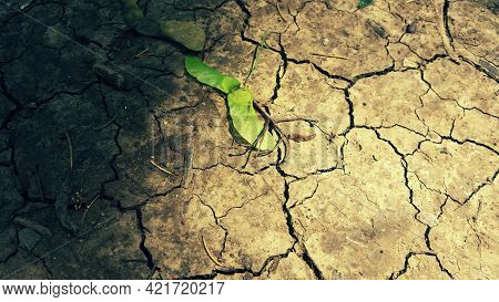 Dry Ground With Green Leaves Fall From The Tree With Sunrays Photo