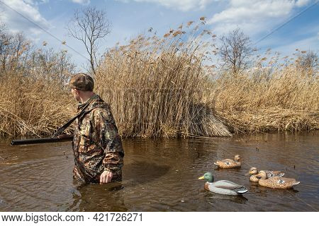 A Hunter Walks Through A Reed-covered Lake In Waist-deep Water. He Pulls Plastic Duck Decoys Tied To