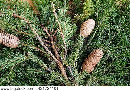 Fir Cones On The Cut-off Green Branches Of A Fir-tree