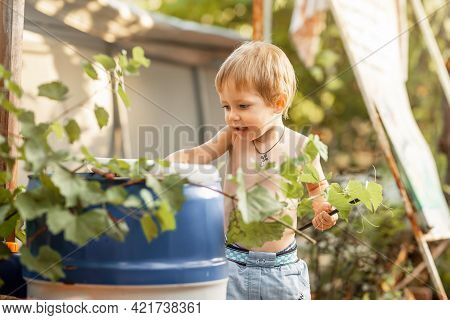 Joyful Boy At Home Backyard On Sunny Summer Day. Funny Little Boy Playing In Sunny Backyard. Prescho