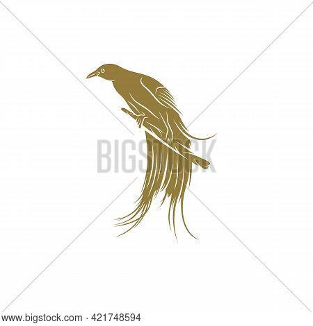 Birds Of Paradise Design Vector Illustration, Creative Birds Of Paradise Logo Design Concept Templat